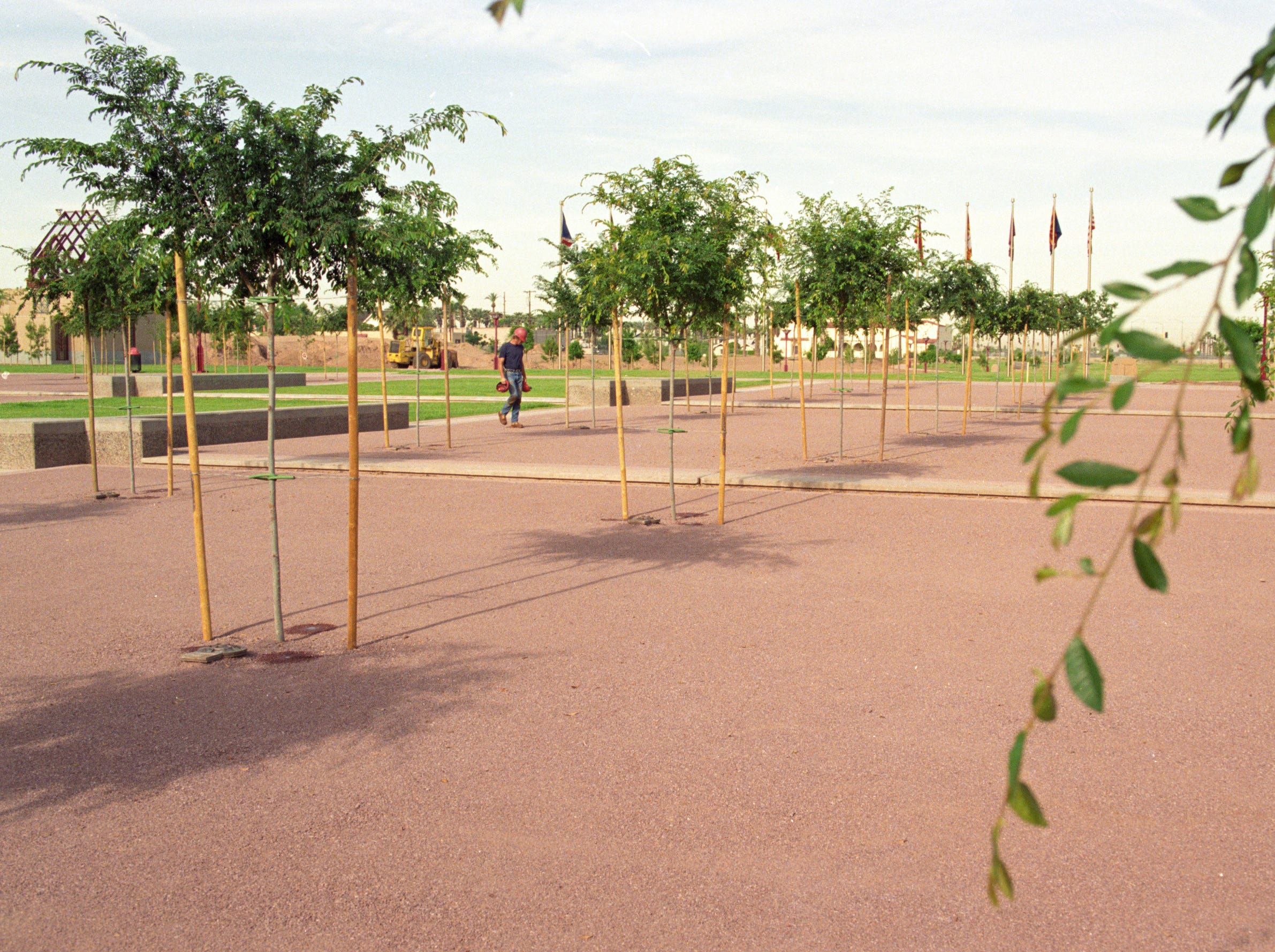 When Margaret T. Hance Park opened in 1992, trees were planted with hopes of creating a tree bosque.