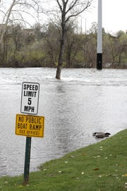 A pair of ducks nibble at grass at the Marina RV Park where the Sacramento River rose Thursday, April 4, 2019. More water was released into the river from Keswick Dam to make room for storm runoff and snowmelt in Lake Shasta.  About a dozen RVs had to be moved from the lower level of the park to escape the rising river.