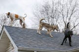 A pack of dogs has started hanging out of the roof of the house were they live in Ozark