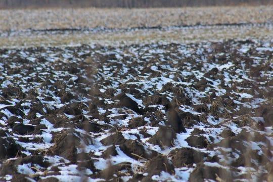 This soil await spring tilling.