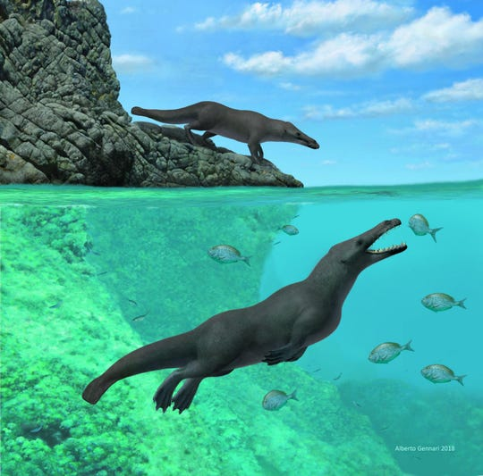 The fossil of an ancient, four-legged whale with hooves uncovered in Peru gives scientists new insights into the evolution of the aquatic mammals, research published Thursday suggests.