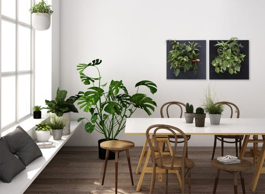 Make plant arrays more visually interesting with varying sizes, shapes, textures and colors.