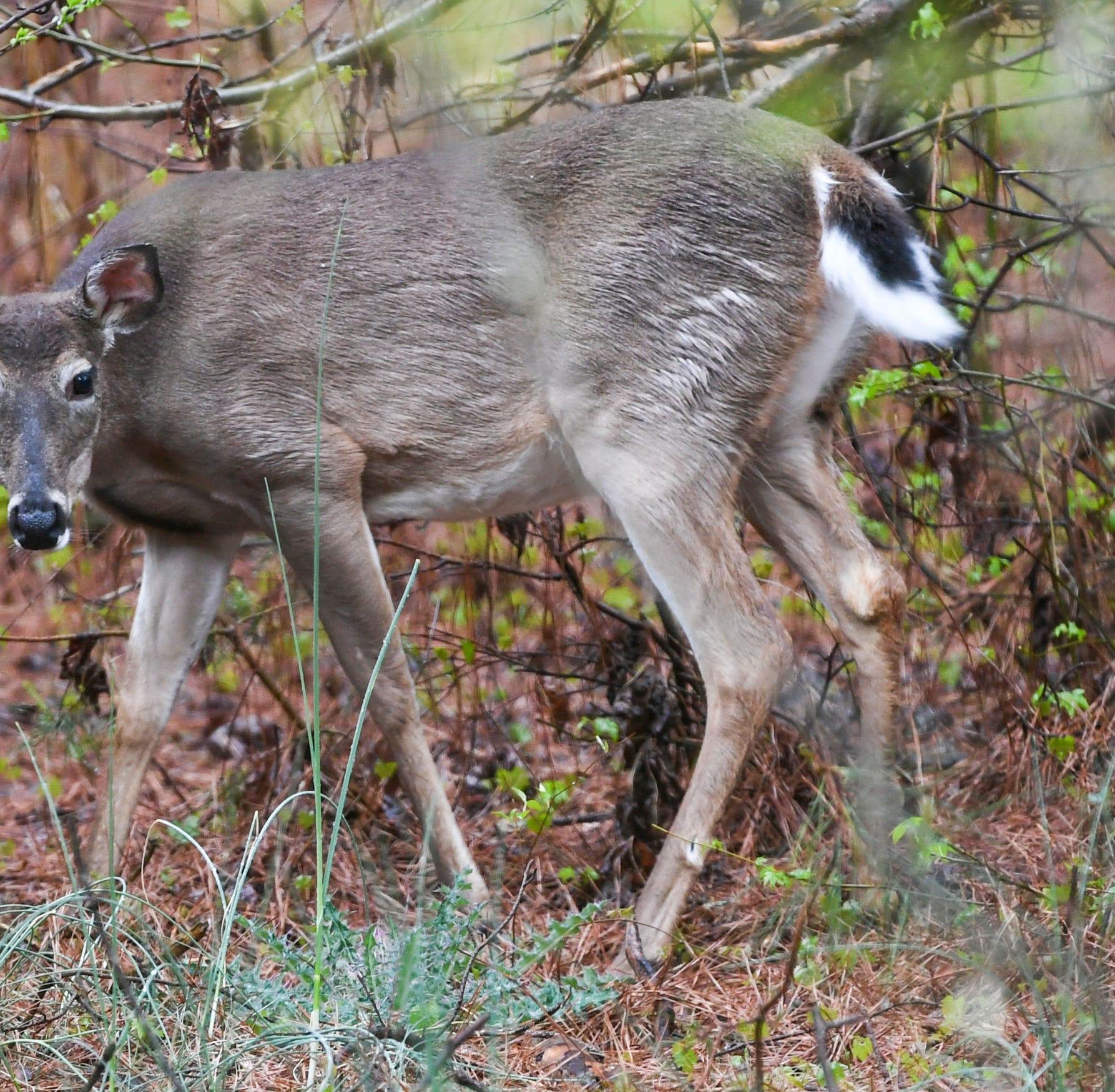 Deer harvest report up for hunters in 2018