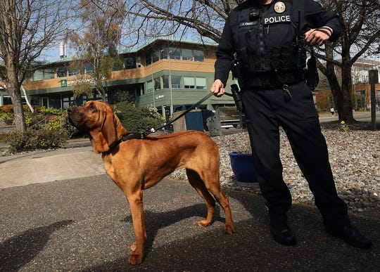 Bainbridge Island Police Department K9 Whitney puts her nose in the air while outside the police station with Officer Kurt Enget.