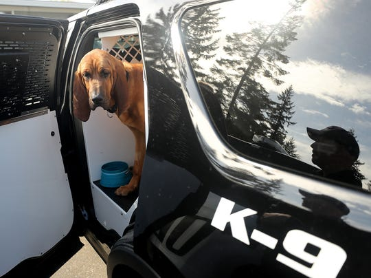 Bainbridge Island Police Department K9 Whitney sticks her head out of the door of Officer Kurt Enget's police SUV.