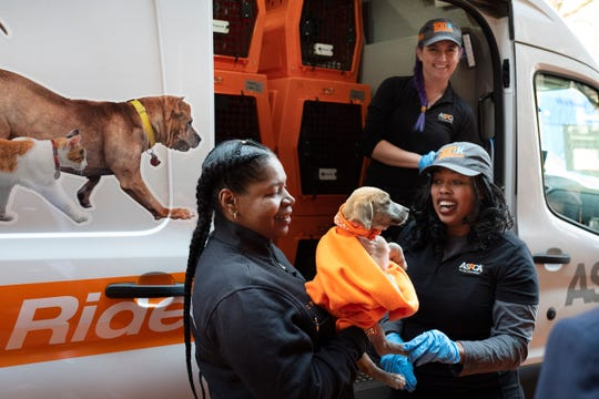 Workers with the ASPCA hold the puppy named Apple as she is unloaded from a van that made the trip to to New York from Mississippi, Thursday, April 4, 2019. The floppy-eared Apple has a new home in the Big Apple courtesy of the animal protection group and an overcrowded shelter in Mississippi. Just days after being rescued from the streets of Starkville, Apple arrived as the 100,000th stray or unwanted animal relocated from the South to the North by the American Society for the Prevention of Cruelty to Animals. (AP Photo/Mark Lennihan)