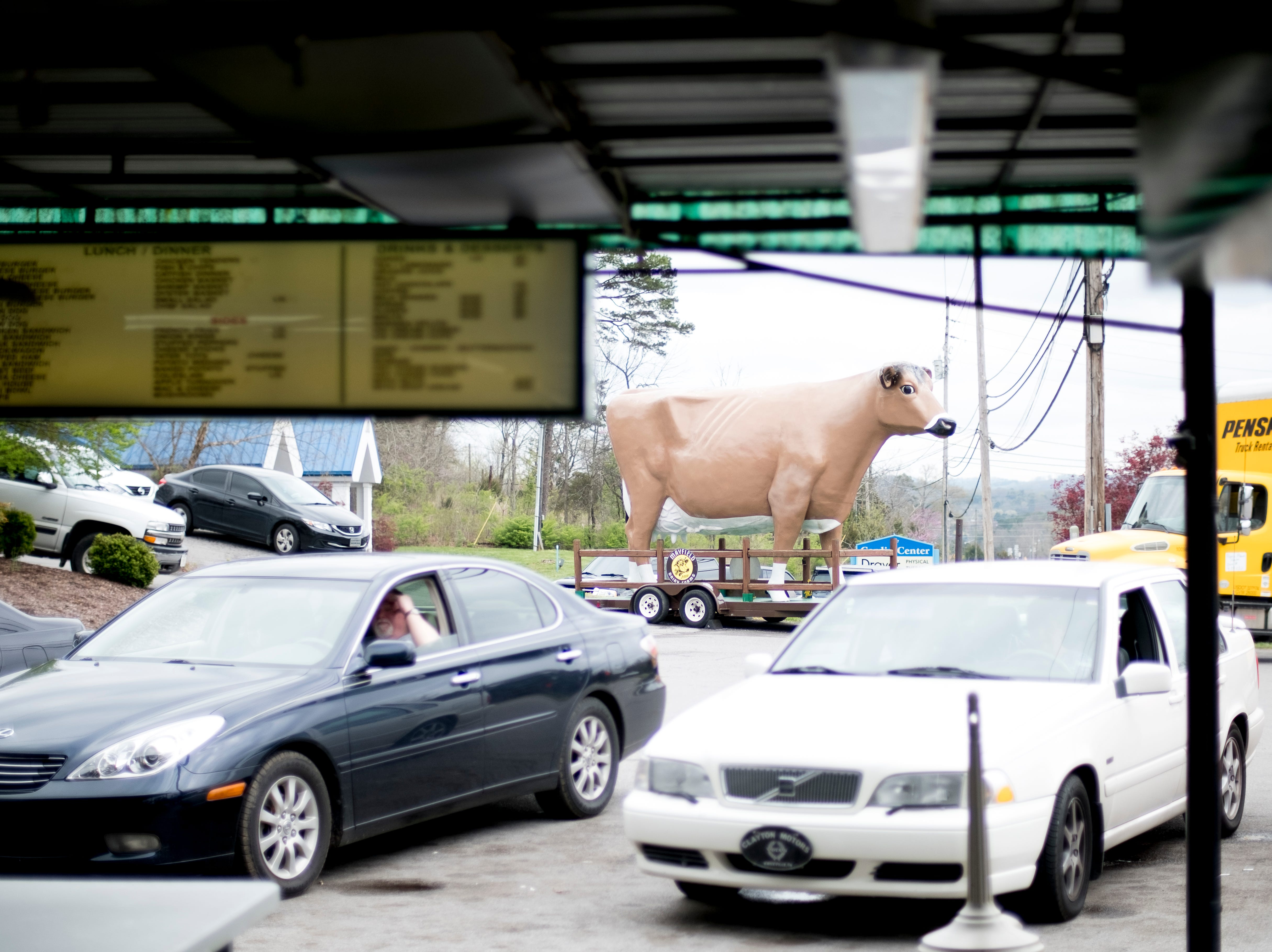 The large landmark Mayfield cow beside Cardin's Drive-In on Asheville Highway in Knoxville, Tennessee on Friday, April 5, 2019. The popular drive-in is celebrating 60 years of business this Saturday with sixty cent ice cream cones.