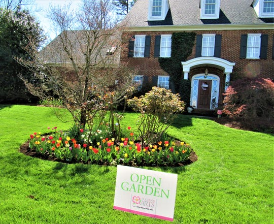 These tulips are on Farragut's Dogwood Trail. Look for Open Garden signs like this one on Altamira Drive to stop and take a closer look.