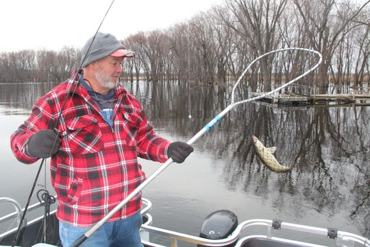 Bob Caryl  nets a 17-inch walleye April 1 on the Wolf River near Red Banks.