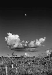 """Big Cypress National Preserve, Florida ""for Art Aid"