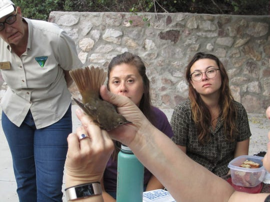 Participants from last year's Bio Blitz, observe BLM Monument Manager Mara Weisenberger spread a bird's tail feathers.