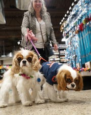 There were lots of four-footed furry guys at Canton's Premier Pet Supply on April 5. Kathleen Higgins has her Cavalier King Charles dogs Saoirse, left, and Teague.