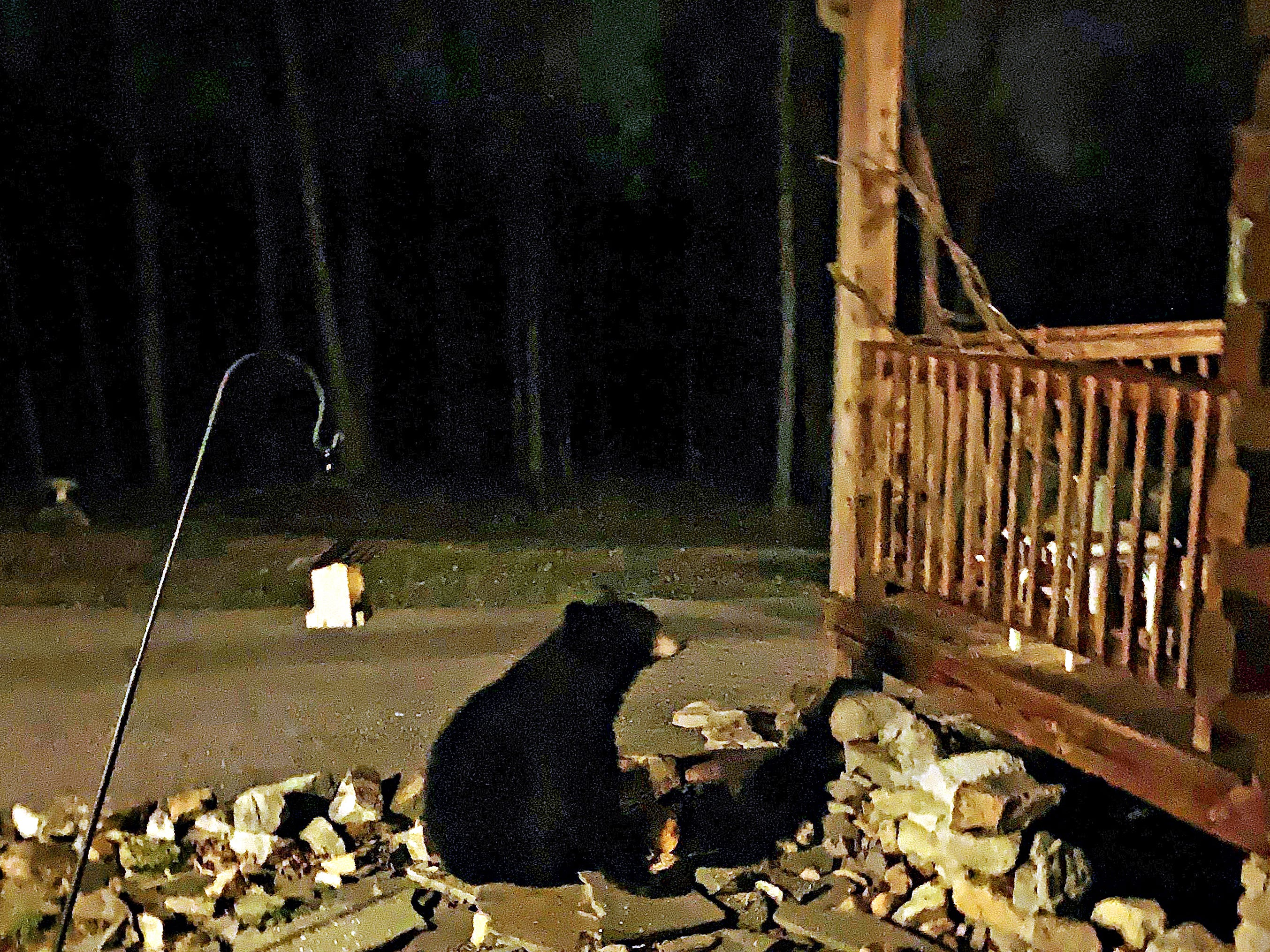 This black bear has been seen on properties in the northwest portion of Hellam Twp. in recent days, according to police, who advise people to merely leave the bear alone. Here, the bear is seen at the home of Karen Holland and her children, Josie and Chaz. She said her children were excited, but a little scared.