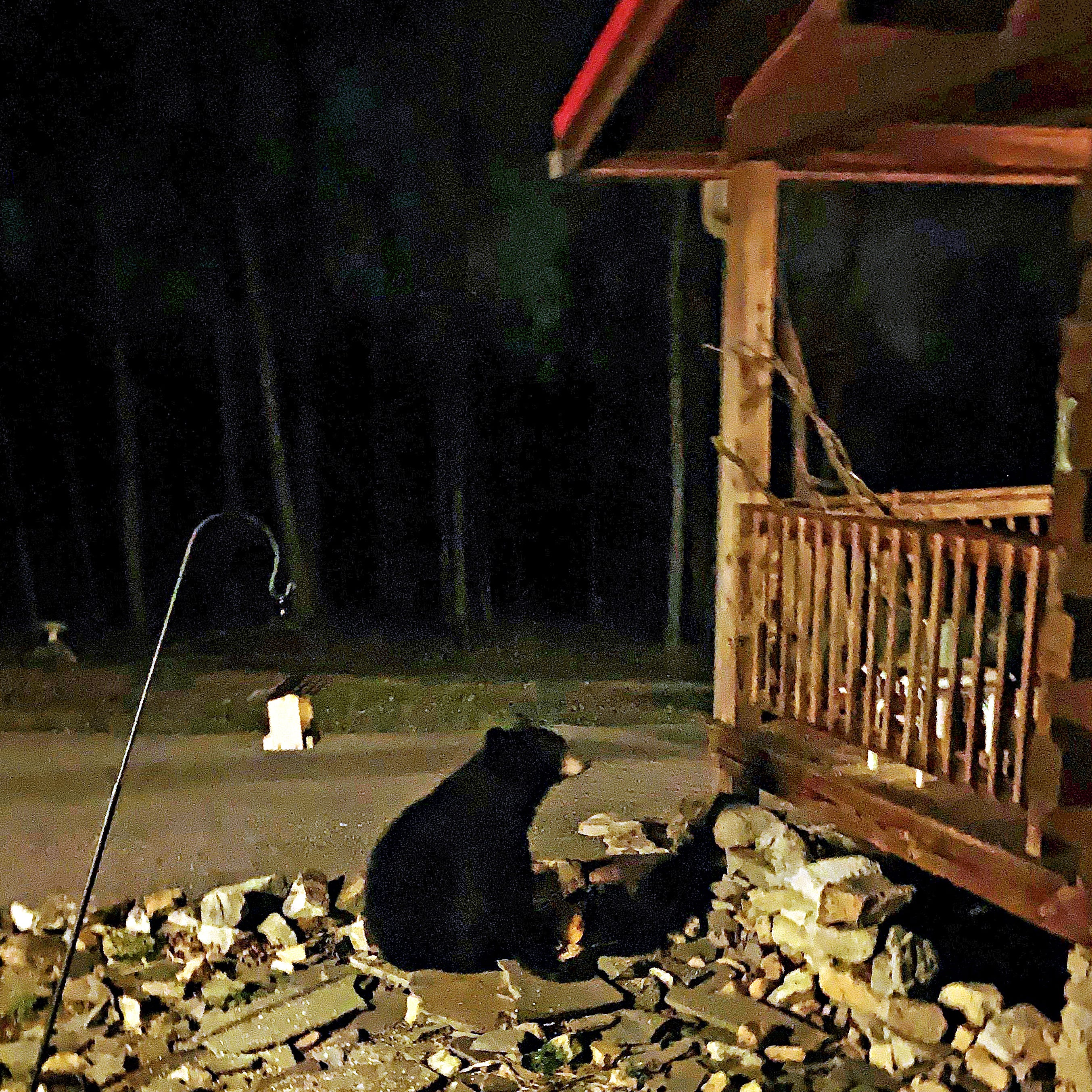 Hellam Twp. family watches and films as black bear snacks on birdseed