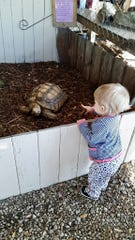 Anna Grace Odom points at Zoe Zoe, one of the Barfield's two African tortoises.
