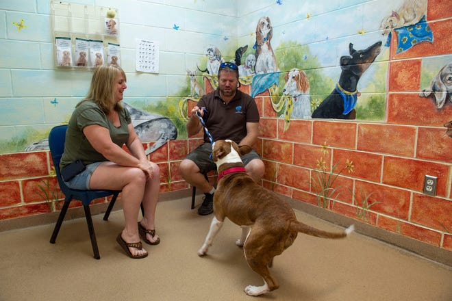 Amy and Jimmy Sheffield, of Port St. Lucie, play with Chuck Norris, a dog they are adopting Friday, April 5, 2019, at the Humane Society of the Treasure Coast in Palm City. Since 2009, the open access shelter has been working toward no-kill status by adding a clinic and veterinarians, creating surgical suites, and expanding the foster program, obedience training and behavioral hotline. After a Trap Neuter and Release ordinance in Martin County went into effect in late 2017, the last part of the puzzle was complete, said Frank Valente, president and CEO of the organization.