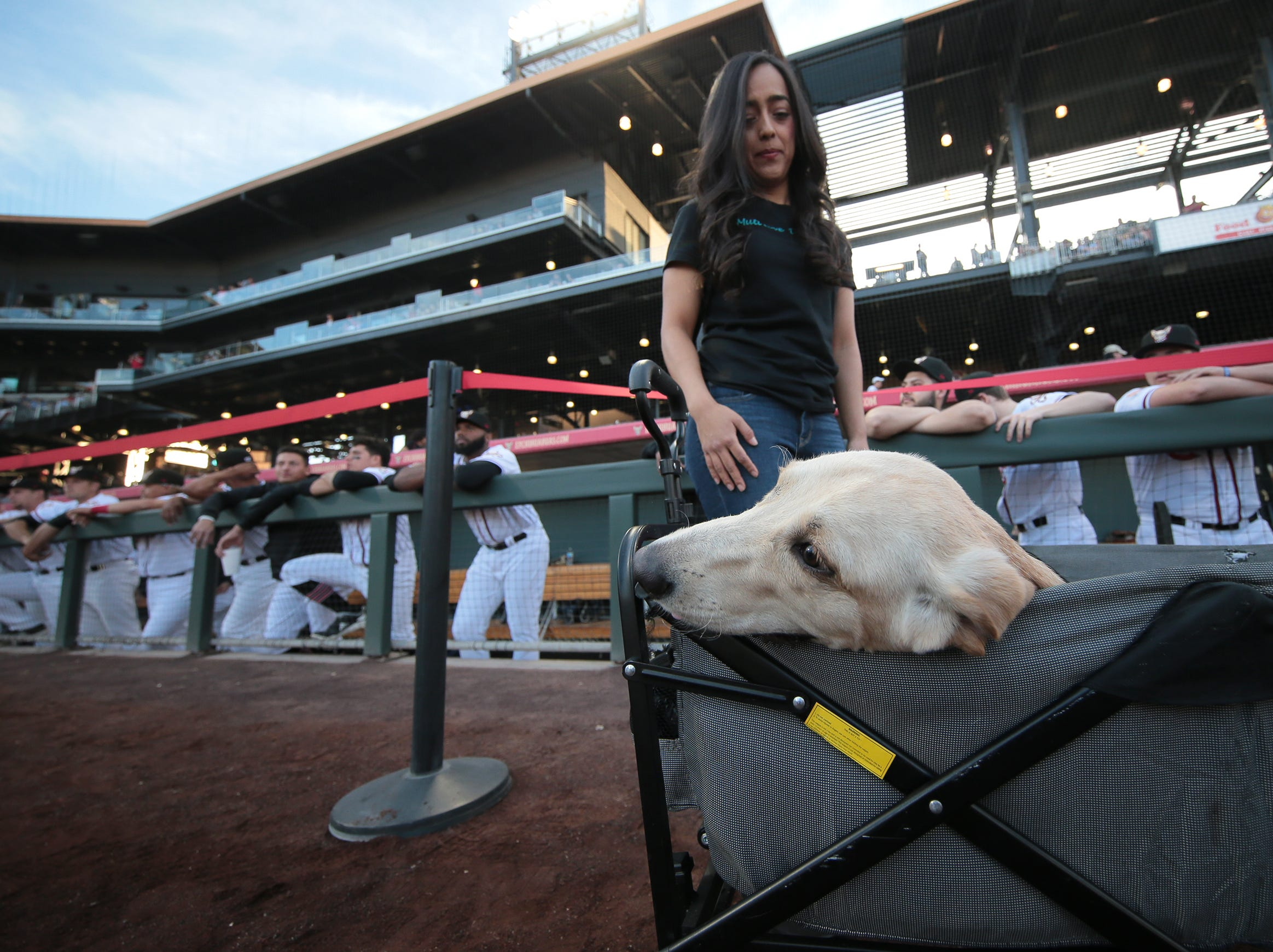 Eight-month-old Marley, a quadriplegic lab, waits to deliver the game ball on opening night Thursday at Southwest University Park.