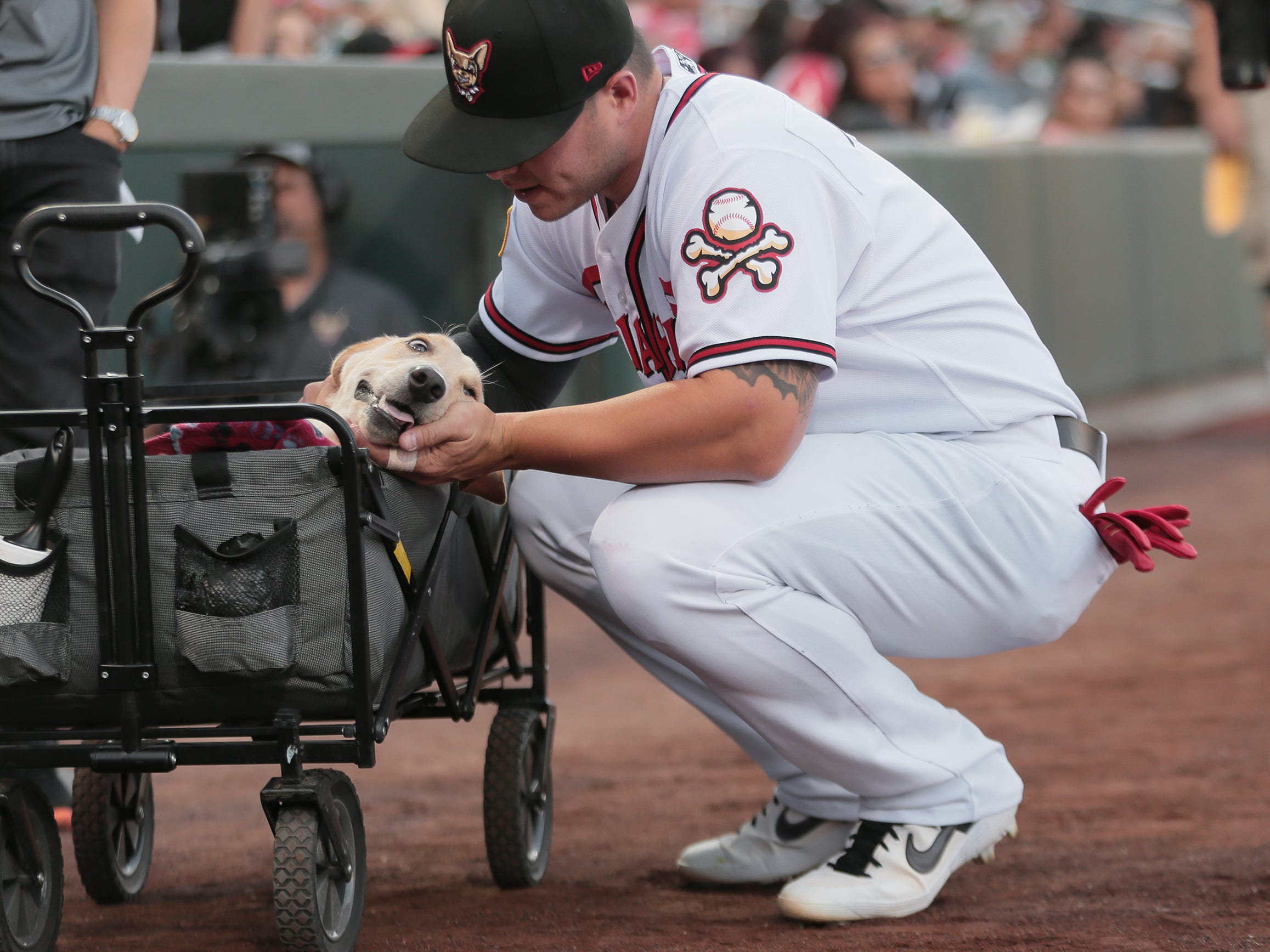Ty France pets 8-month-old Marley, a quadriplegic lab who brought out the game ball on opening night at Southwest University Park.