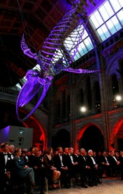 "Guests for the premiere of Netflix's ""Our Planet"" sit beneath the London Natural History Museum's famed blue whale skeleton April 4."