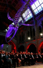 """Guests for the premiere of Netflix's """"Our Planet"""" sit beneath the London Natural History Museum's famed blue whale skeleton April 4."""