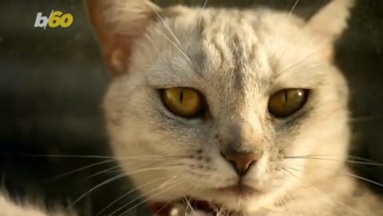 Cats are paying attention to you, even if they act like they don't care, study suggests