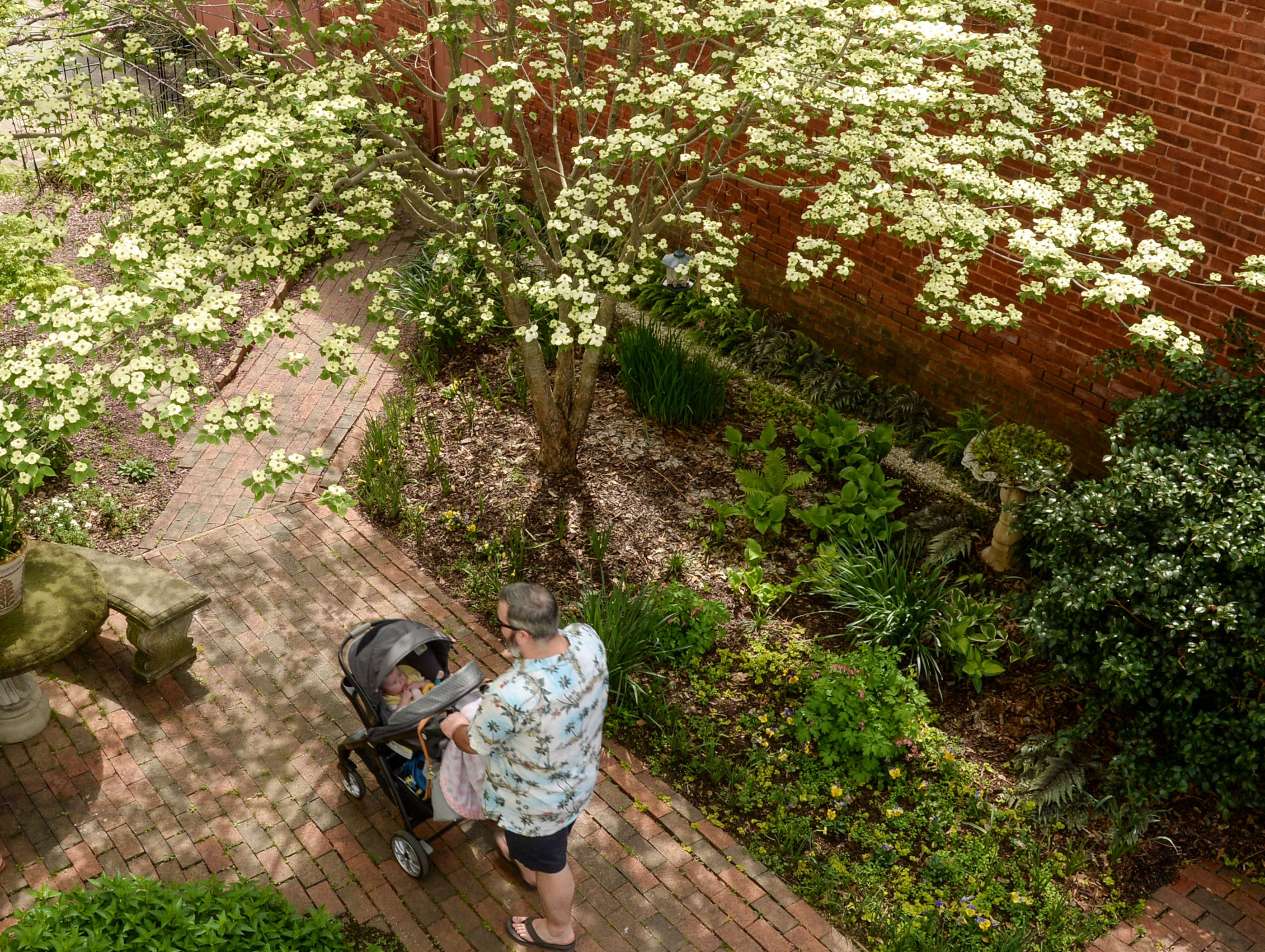 Dogwood tree blooms near visitors at the Spring Jubilee in Historic Pendleton Saturday.