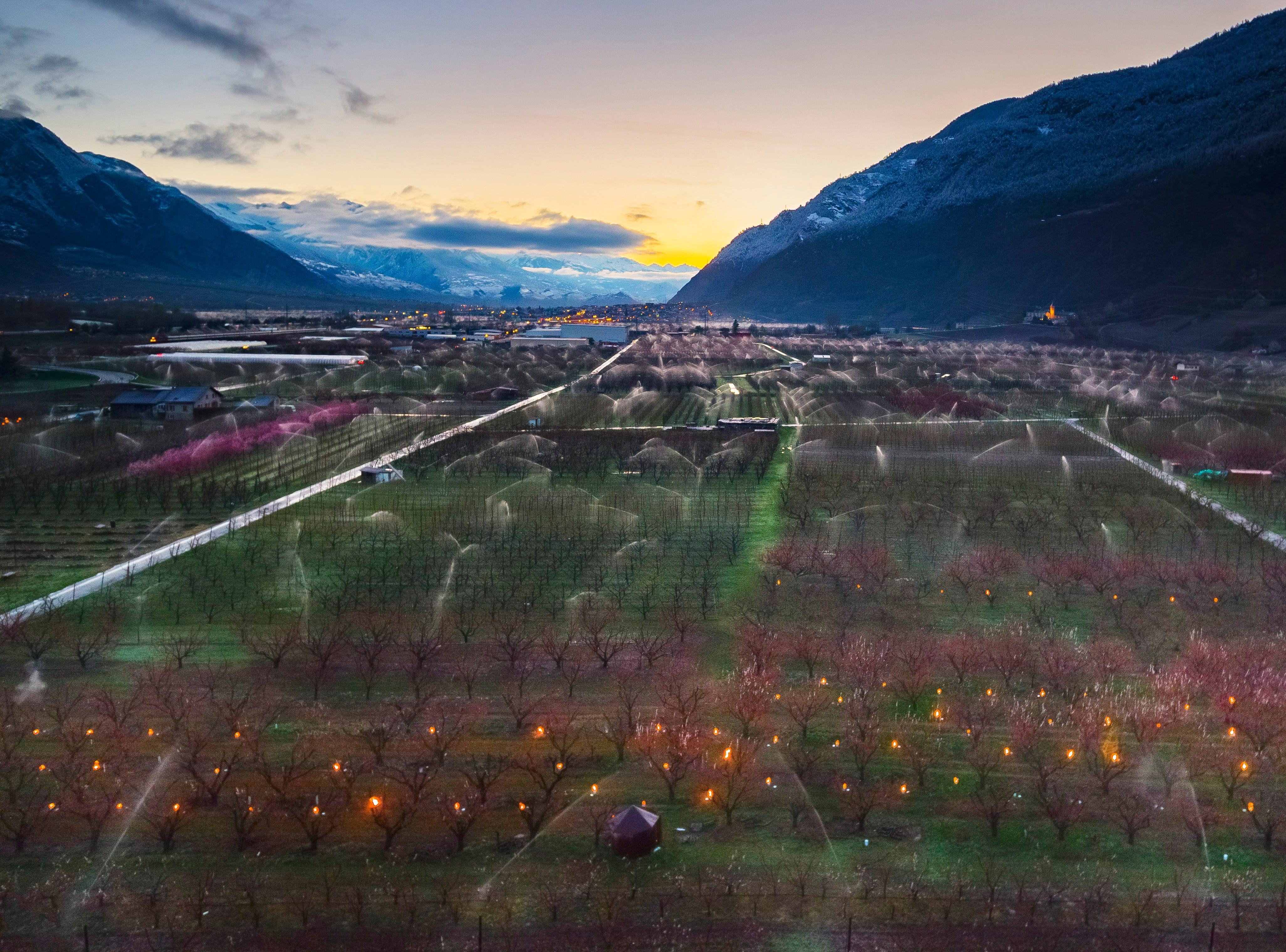 Anti-frost candles burn in apricot orchards to protect blooming buds and flowers from the frost, in the middle of the Swiss Alps, in Saxon, Canton of Valais, Switzerland, Friday, April 5, 2019. With an unusually low temperature forecast for the season, fruit growers try to protect their buds from frost damage with two different means, icy water or large candles.