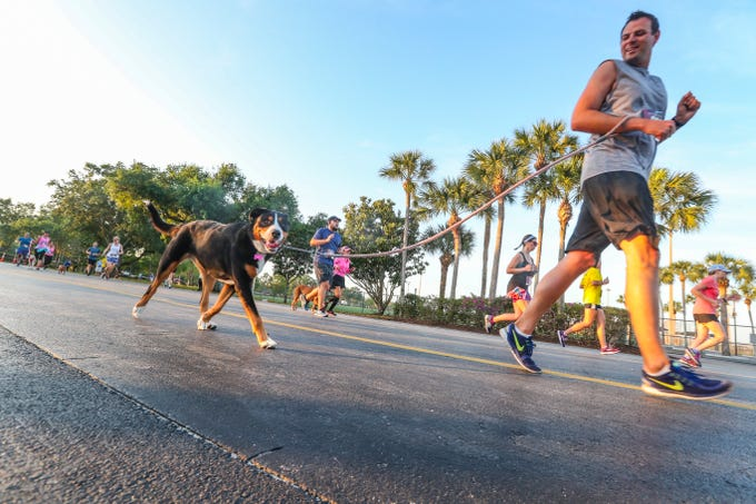 Christopher Smith with his dog, Bailey Charles, ran the 5K. The Ninth Annual ÒThe Fast and the FurriestÓ, April 6, 2019, at Hammond Stadium. The 5K Run/1-Mile Walk fundraiser directly benefited the Gulf Coast Humane Society shelter animals.