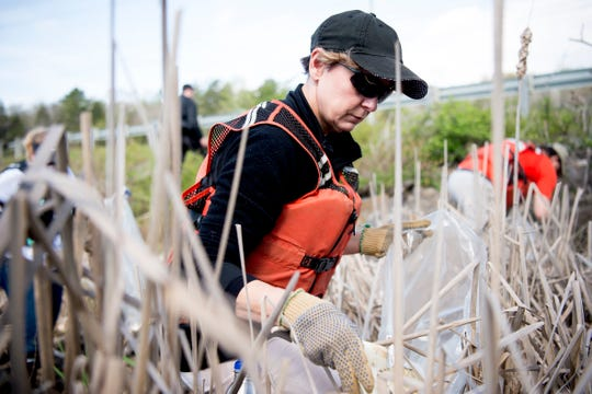 Kim Denison cleans up trash from within the reeds during a river clean up of the Clinch River near Solway Park in Oak Ridge, Tennessee on Saturday, April 6, 2019. Dozens of volunteers cleaned up several areas on the river of debris and trash.