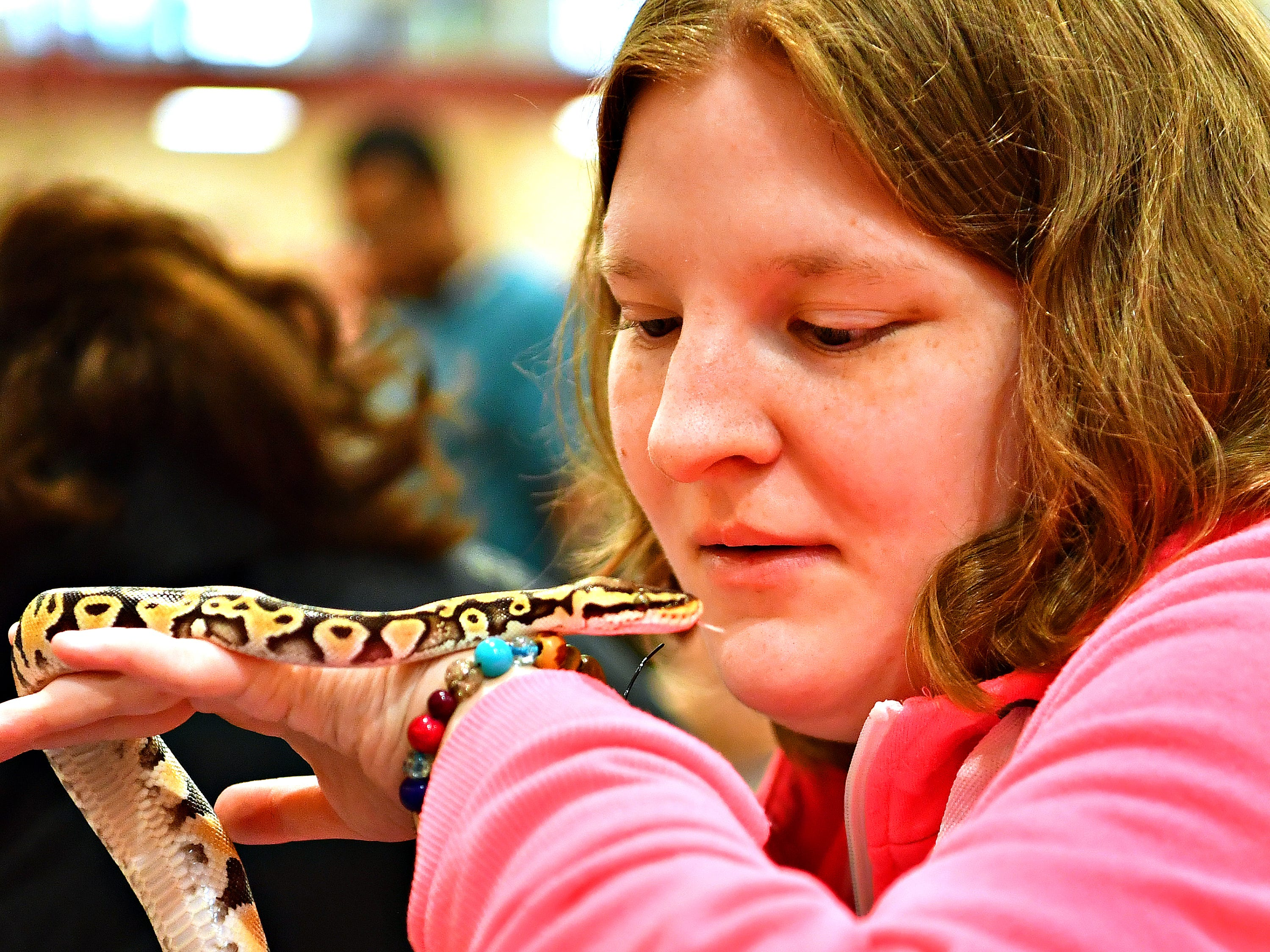 Kelley Bowe, 27, of Glen Rock, holds a ball python for the first time. The snake was provided by Critter Connections, based in York Township, during the 2019 Walk for Autism & Autism Expo at Central York High School in Springettsbury Township, Saturday, April 6, 2019. Dawn J. Sagert photo