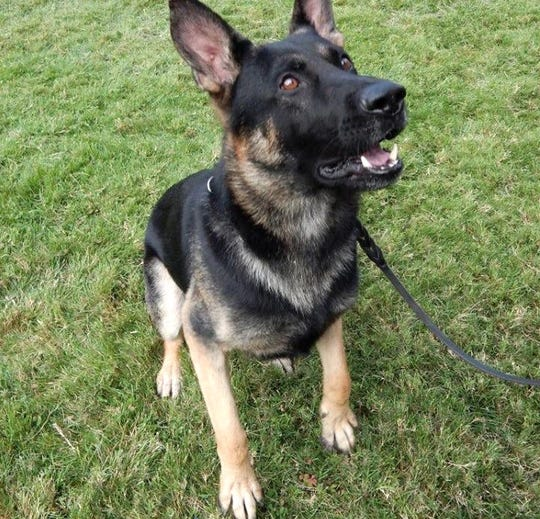 K-9 Fritz of the Shasta County Sheriff's Office aided in the arrest of a driver who hadmethamphetamine, the Shasta County Sheriff's Office says.