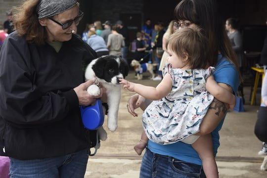 Violet Grimm, 1, pets 8-week-old Border Collie/Australian Cattle Dog mix Nordy, adopted from B Squad Rescue, at the first ever SD Beard Clash: Doggie Style competition on Saturday, April 6, 2019, at Remedy Brewing Company. Proceeds from the event went to Almost Home Canine Rescue.