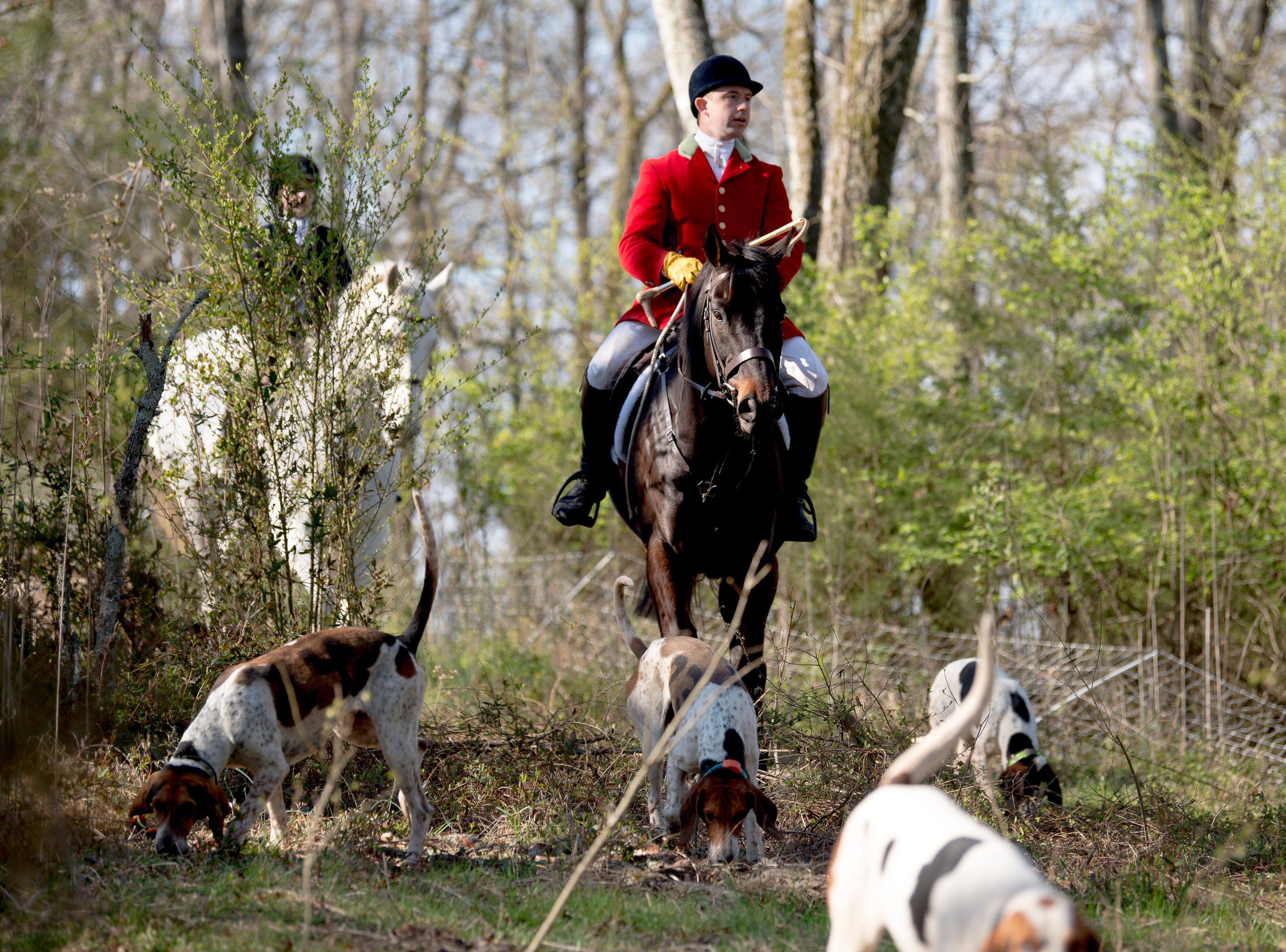 TVH Master Huntsman Ryan Johnsey and first flight member Jeanie Seaman, in back, lead a group foxhounds through the woods during a fixture at Riverplains Farm in Strawberry Plains, Tennessee on Wednesday, March 27, 2019.