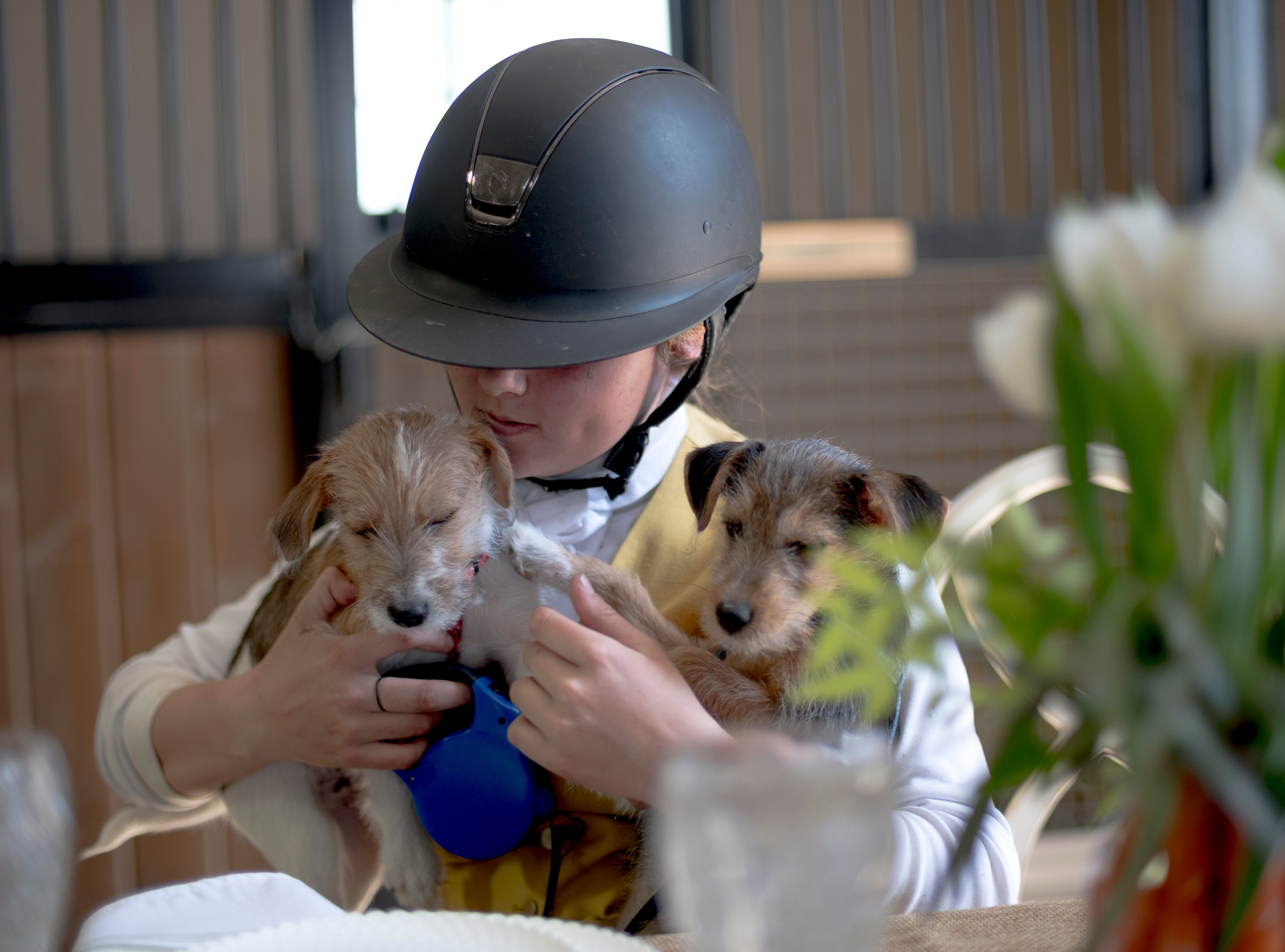 Marley Spears, 15, of Knoxville, plays with her hunt terrier puppies Jack and Olive during a fixture at Blackberry Ridge Farm in Greeneville, Tennessee on Saturday, March 30, 2019.
