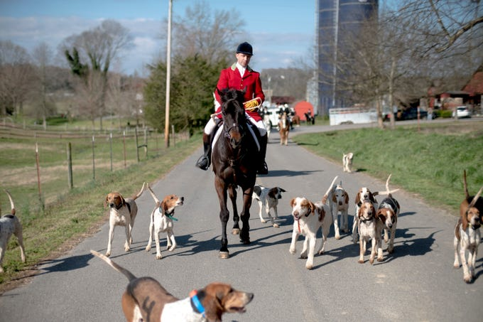 TVH Master Huntsman Ryan Johnsey leads a group of foxhounds down a road during a hunt at Riverplains Farm in Strawberry Plains, Tennessee on Wednesday, March 27, 2019.