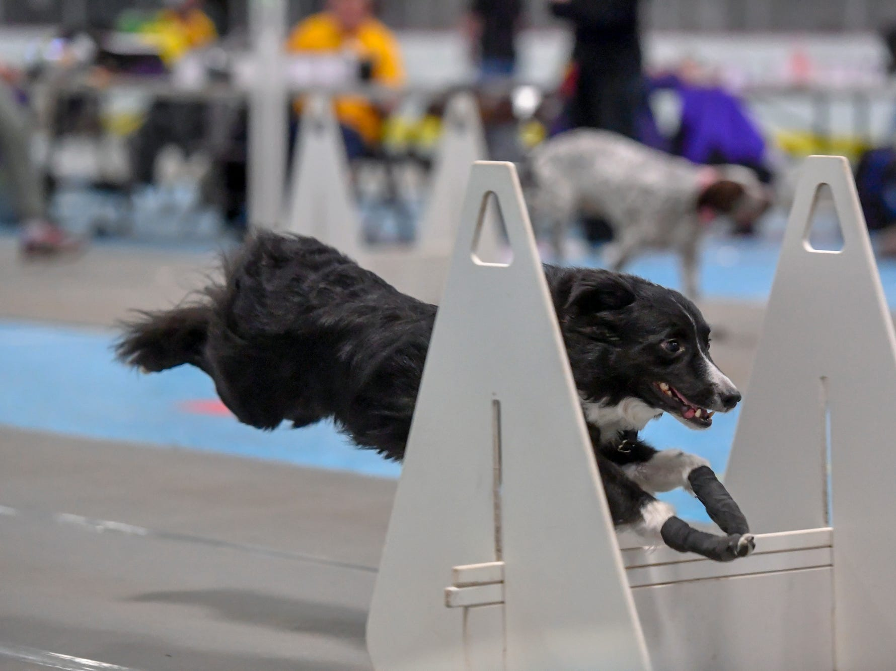 More than 40 teams compete in the Clean Break Flyball tournament at the Yellow Breeches Sports Complex in New Cumberland, Sunday, April 7, 2019.