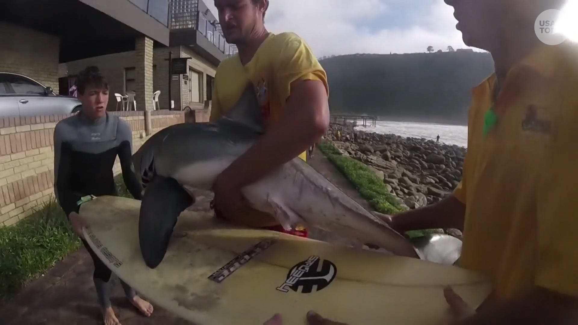 Great white shark was dying on the rocks when a group of surfers came to its rescue