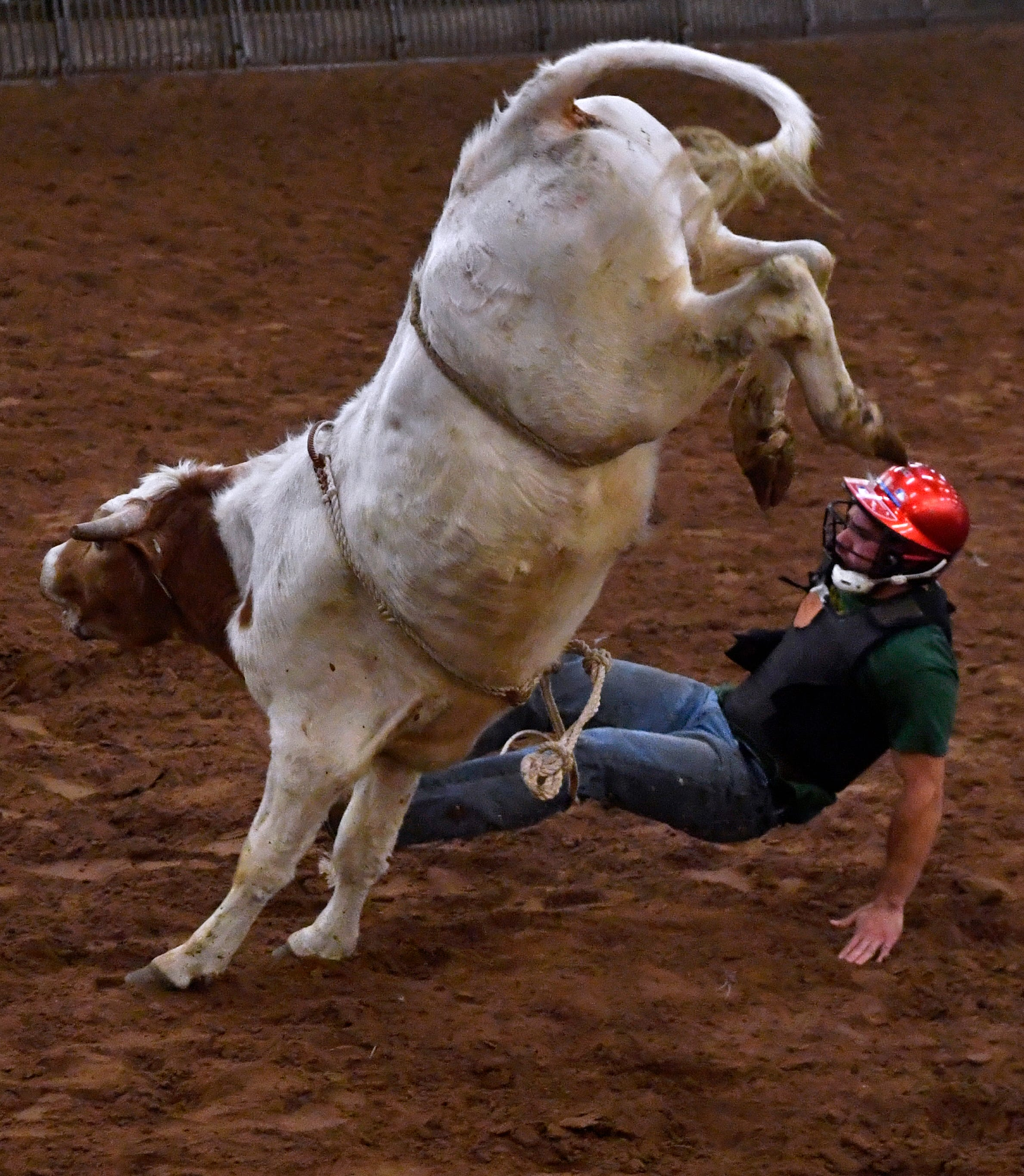 Luke Schmitt is bucked from a steer during the ACU Intramural Rodeo.