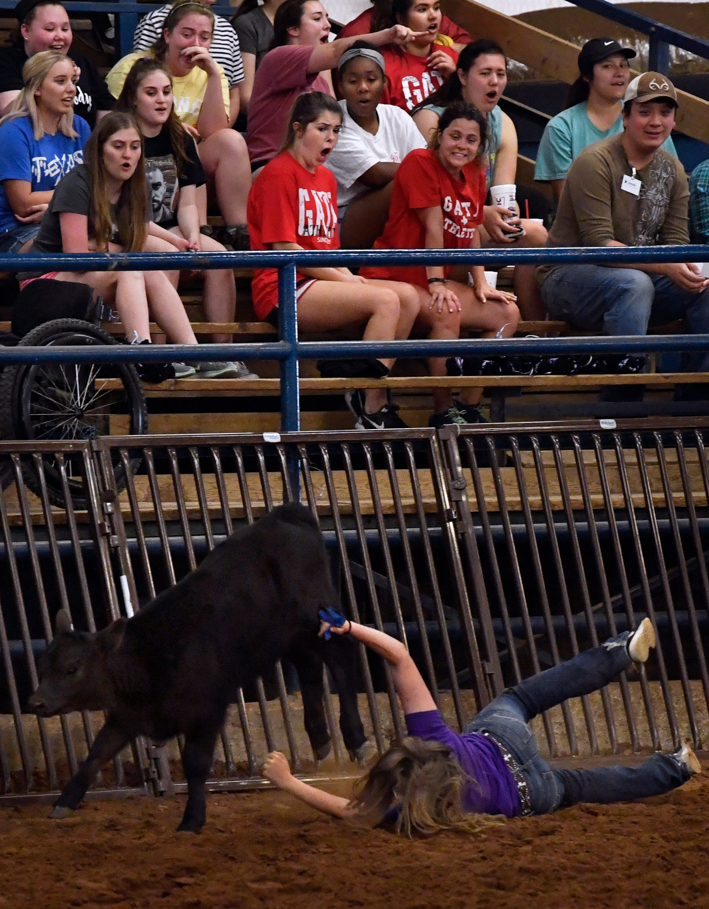Audience members react as an ACU student loses her grip on a calf during the calf scramble Thursday at the ACU Intramural Rodeo.