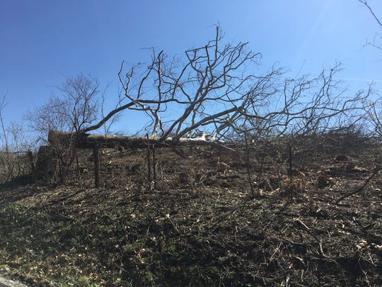 April 3, 2019: A cut down tree on land near Limaburg Creek Road where Amazon Prime Air is clearing rolling hills to make way for new air cargo hub.