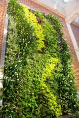 A two-story, living green wall in the college's Ray Bateman Center for Student Life and Leadership hosts mostly tropical plants and provides a relaxing, natural environment for students.