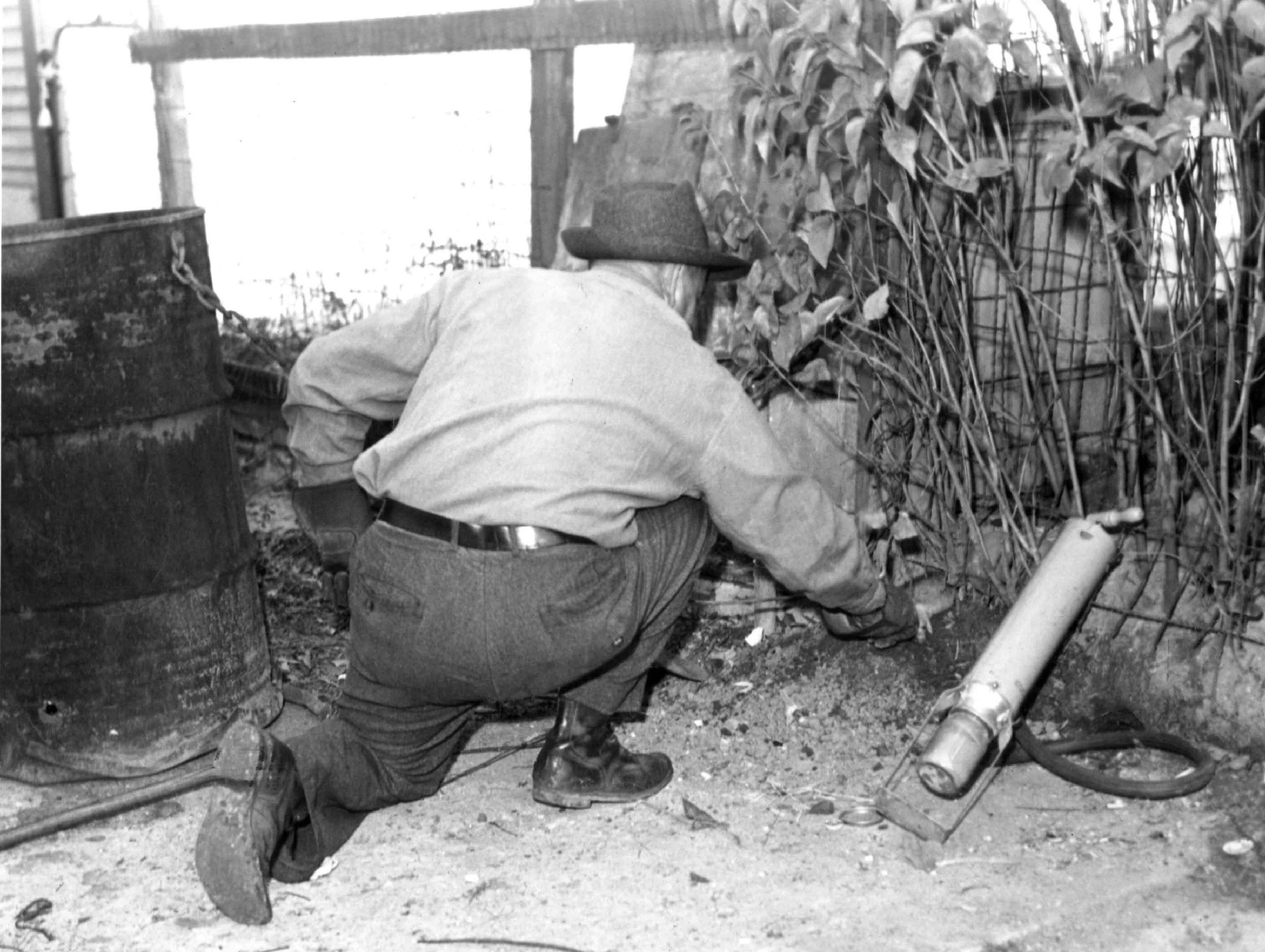 Exterminator Don Rutter grabs a rat that has been stunned by a cyanide pump on the west side of Detroit.