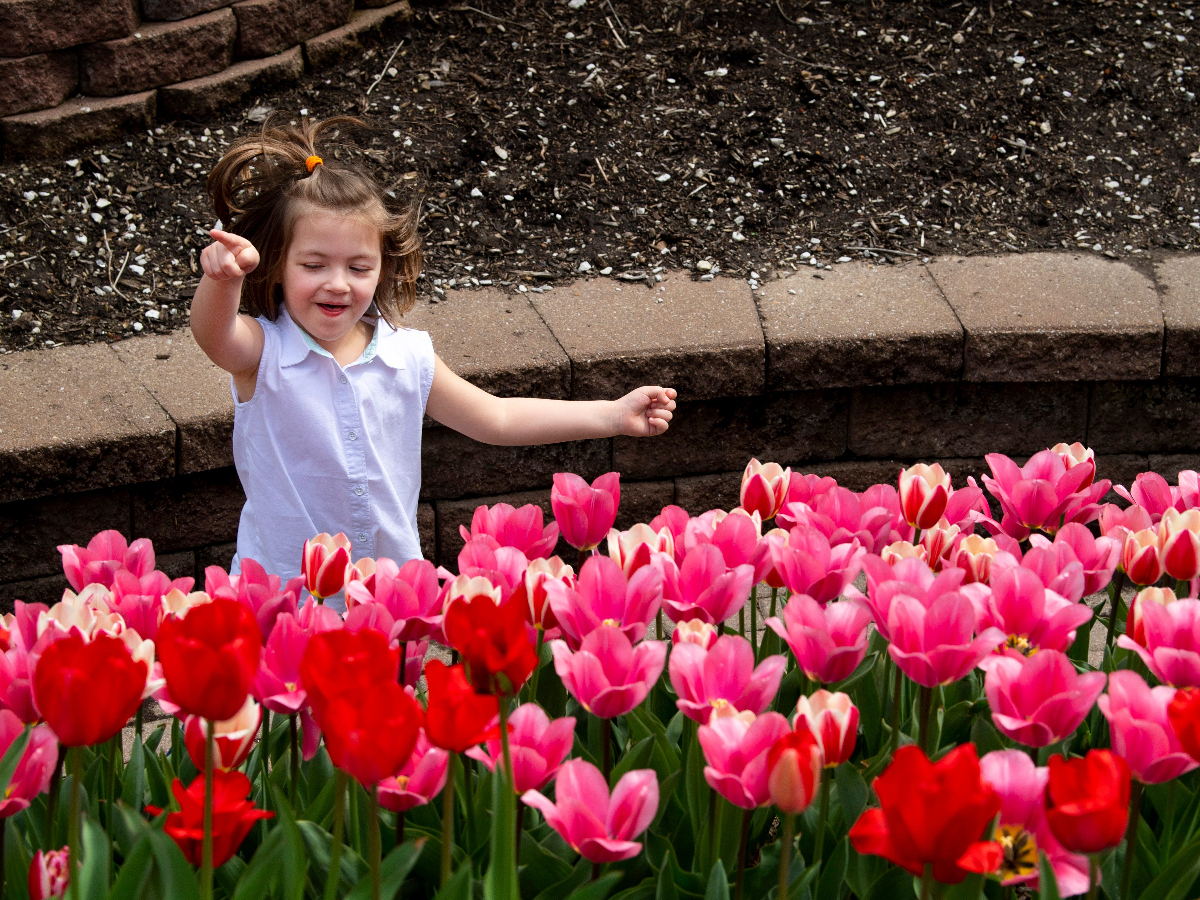 Ellie Feltz, 4, of Evansville points out the tulips for her brother, Jeffrey, 1, and mom, Katie, while running along the path at the Evansville Visitors Center Pagoda Monday afternoon. The temperatures had already hit the low 70s for the day and the next few days are forecast to also be in the low 70s with plenty of sunshine.