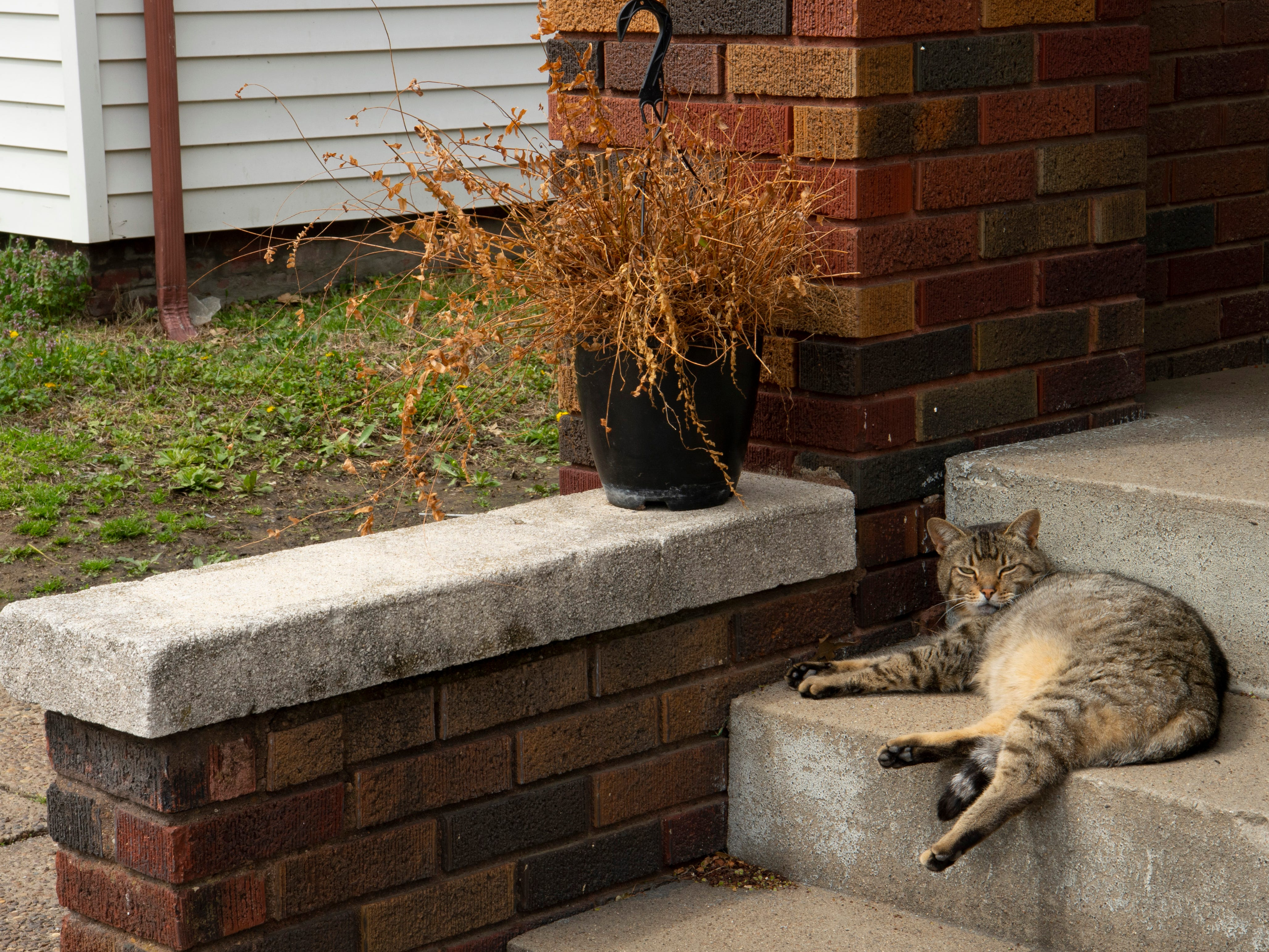 A sun-warmed concrete step made an inviting place to lounge for a Jacobsville neighborhood cat Monday afternoon.