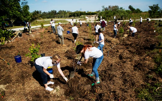 Hertz Corp. employees plant trees at Lakes Park on Friday April 5, 2019. More than 20 volunteer co-workers along with representatives of Future Forestry and One Tree planted on a small plot of land. Hertz had more than 350 employees out at different locations throughout Southwest Florida working on beautification projects.