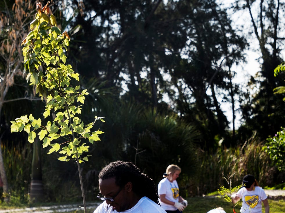 James Green, an employee of the Hertz Corporation plants a tree at Lakes Park on Friday April,5, 2019. He and more than 20 of his volunteer co-workers along with representatives of Future Forestery and One Tree planted on a small plot of land. Hertz had more than 350 employees out at different locations throughout Southwest Florida  working on beautifcation projects to mark Earth Month. The trees were provided by Hertz. Russel Ringland of Future Forestry oversaw the project.