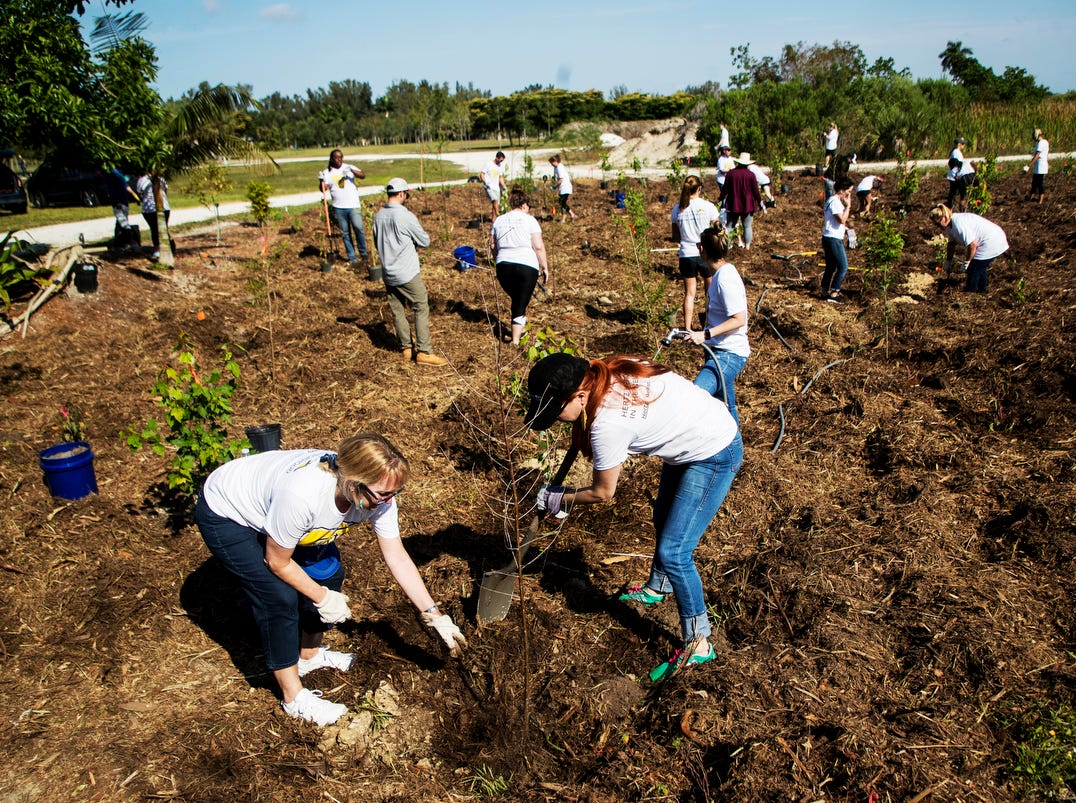 Hertz Corporation employees plant trees at Lakes Park on Friday April,5, 2019. More than 20 volunteer co-workers along with representatives of Future Forestery and One Tree planted on a small plot of land. Hertz had more than 350 employees out at different locations throughout Southwest Florida  working on beautifcation projects to mark Earth Month. The trees were provided by Hertz. Russel Ringland of Future Forestry oversaw the project.