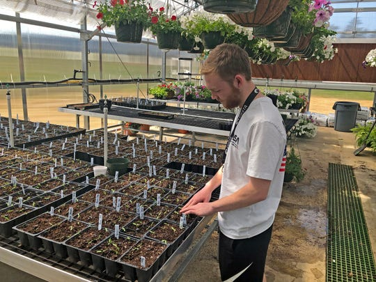 Sophomore Gabe Todd checks on the vegetable seedlings that he and his classmates germinated last month.