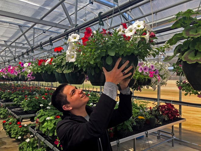 Junior Gunner Chong hangs a flowering plant in the high school's new greenhouse.