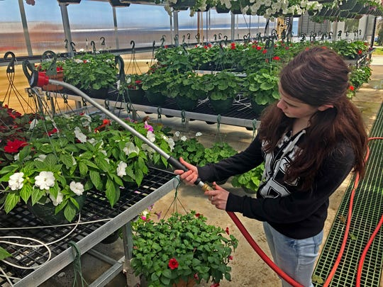 Sophomore Celine Hall prepares for the upcoming FFA Plant Sale.
